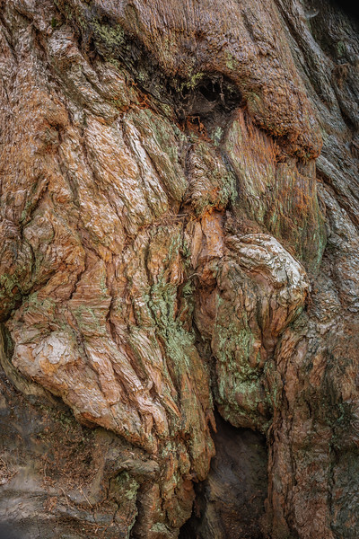 Sequoia-4853.jpg