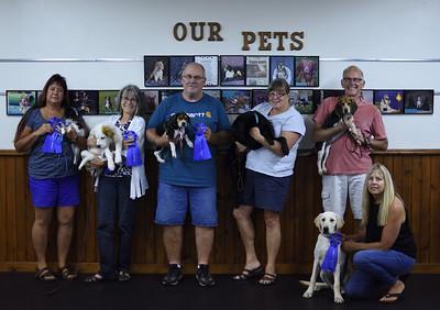 Puppy Class - July/August 2018