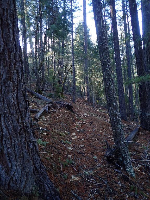 Viewpoint Trails Applegate Lake Oregon