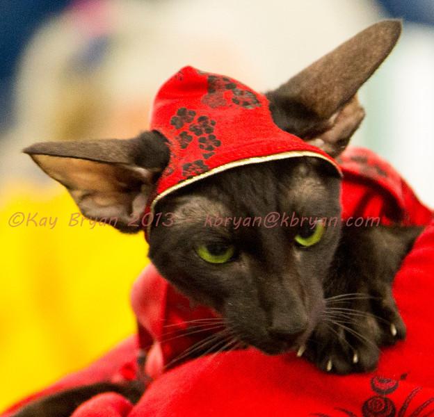 CatShow2014055.JPG