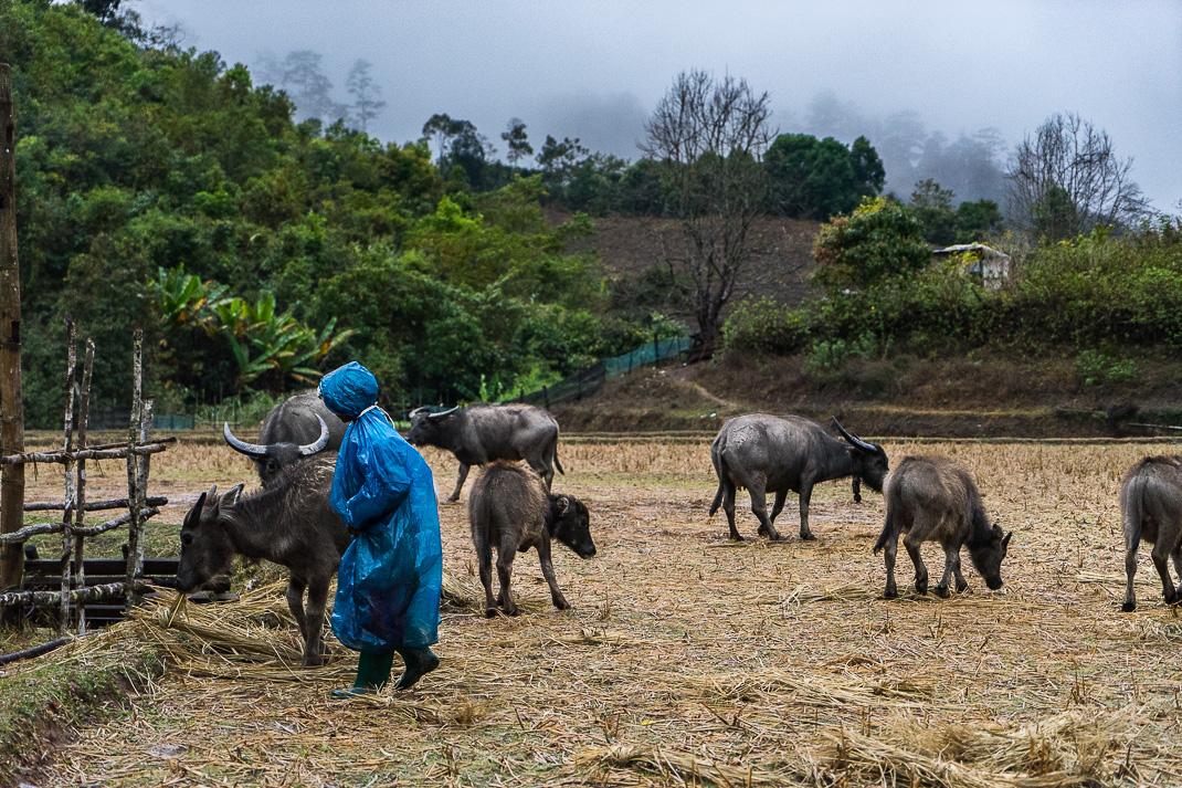 Mae Chaem Wet Farmer