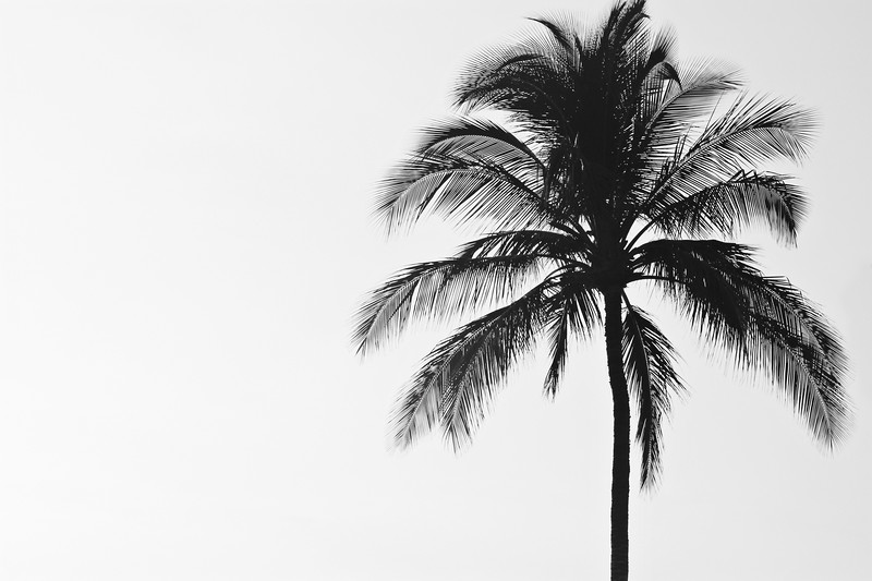 JM_2015_Hawaii_LonePalmTree.JPG