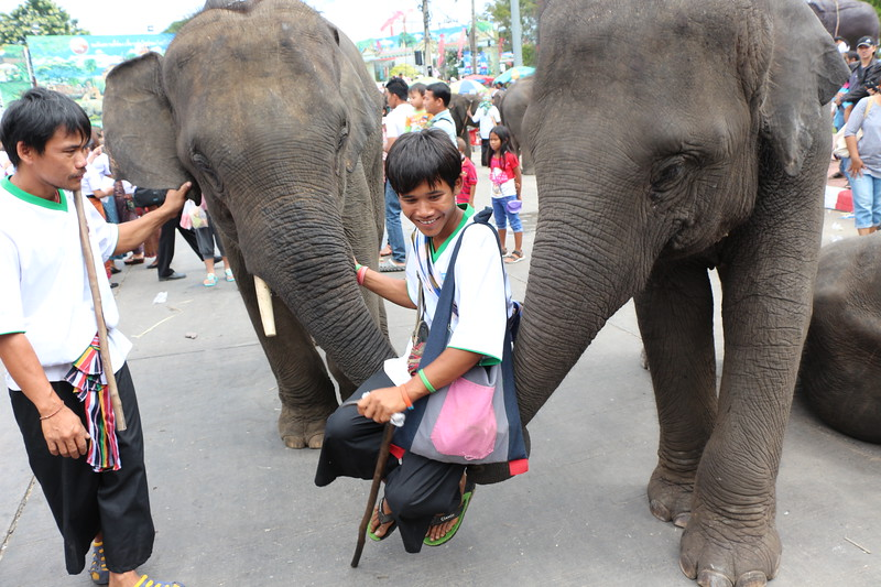 2014-11-14 Surin Elephant Welcome Feast 691.JPG