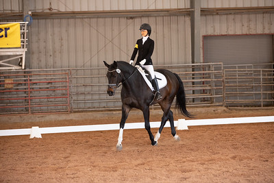 Horse 143