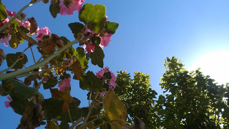 Pink Flower(WEV)