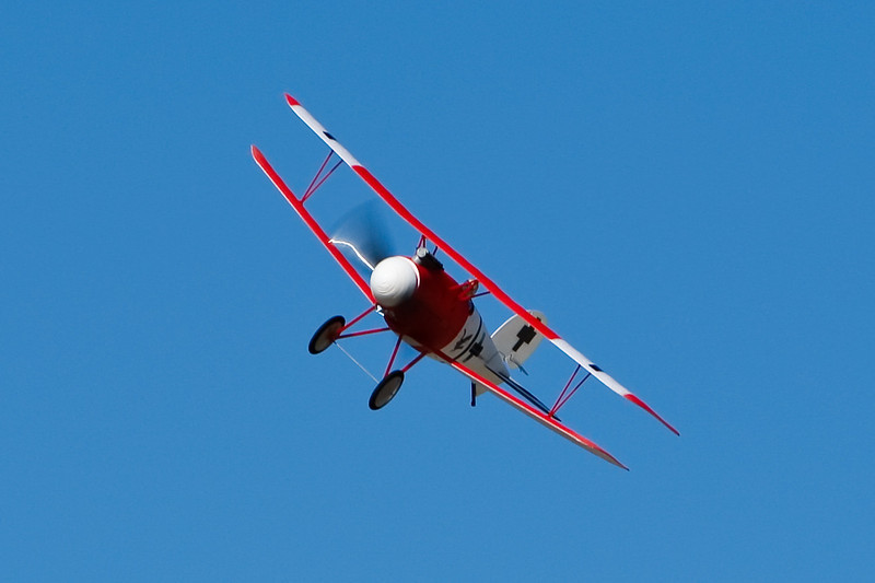FZ_AlbatrosDV_21.jpg