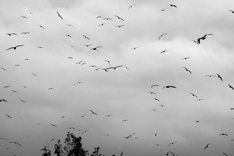 Gulls against a winter sky. Fremont, CA