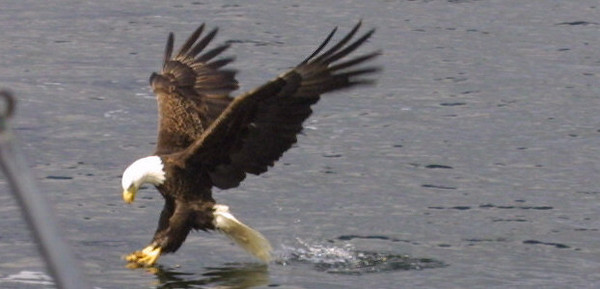eagles from disc 027.jpg