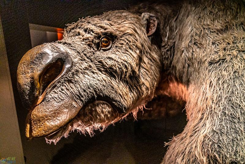 Australia-Museum-1380.jpg