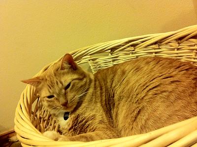 2012/11 - Mercury in a Basket