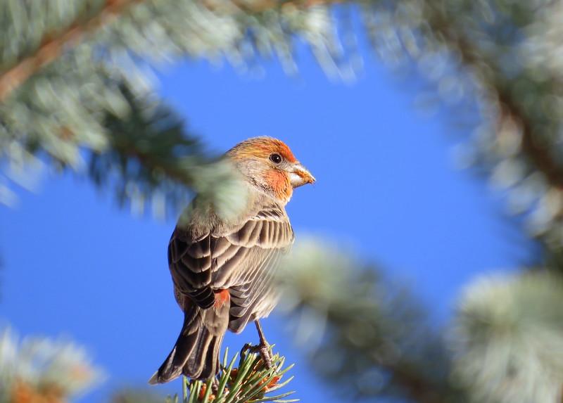 birds (105).JPG