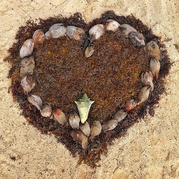 FMS0338 4285 Belize Seaweed Heart 3150dpi.jpg