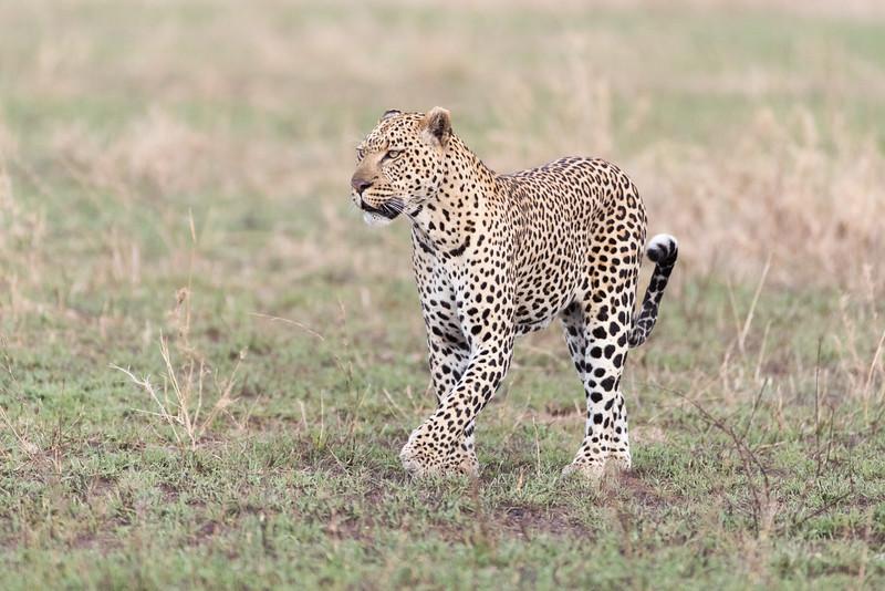 Africa - 101616 - 5612.jpg