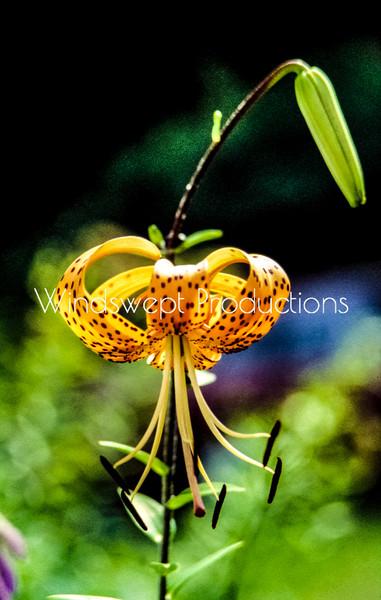 Windswept Floral