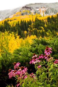 Flowers in front of fall colors in East Vail, CO