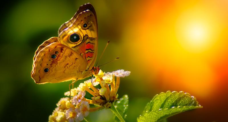 Butterflies-010.jpg