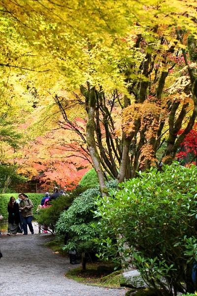 Portland Japanese Garden  11-11-11  3513.jpg