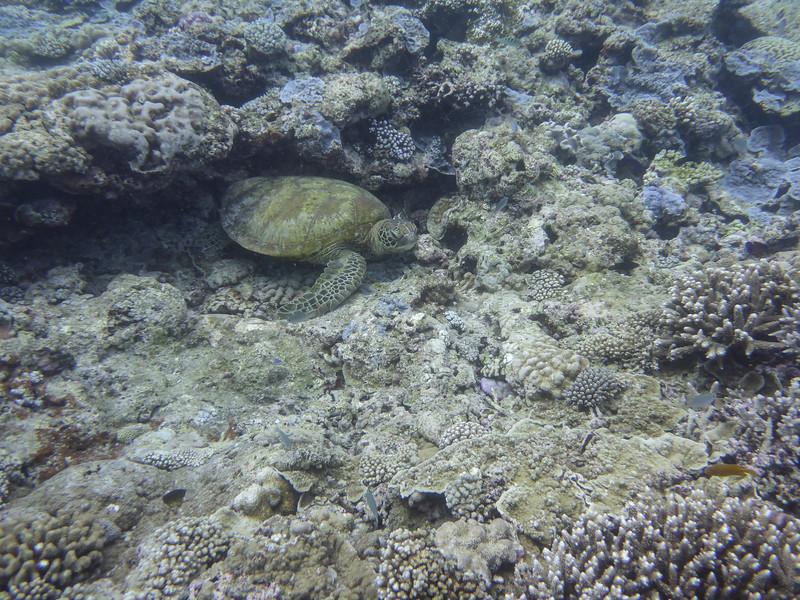 09. Lady Elliott Island-0514.jpg