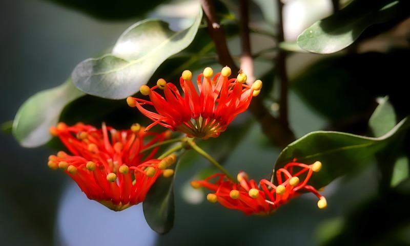 IMG_4422 Flower Red Weird Blossom.jpg