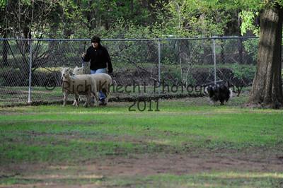 Saturday P/T Sheep