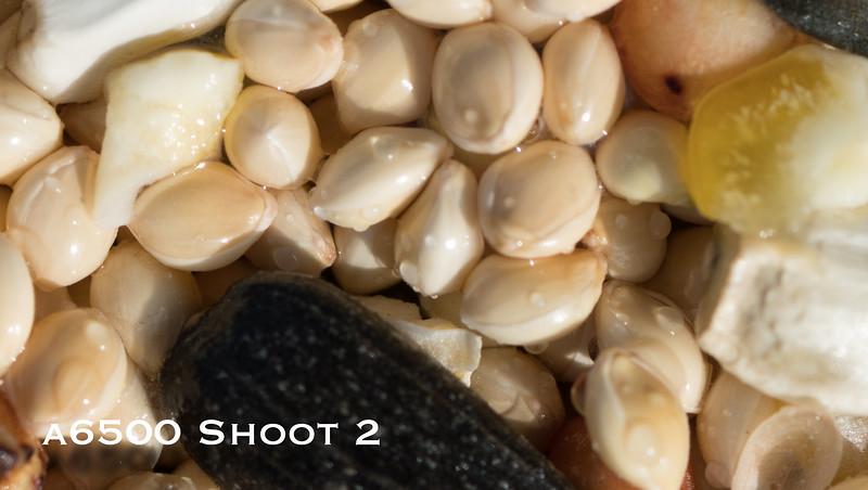 a6500 macro - Shoot 2-10.jpg