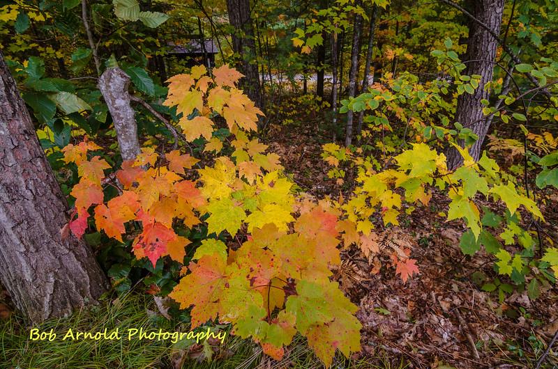NH Foliage-3.jpg