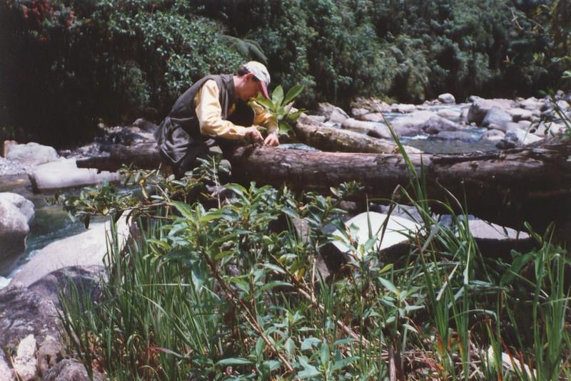 Seeking termites.jpg