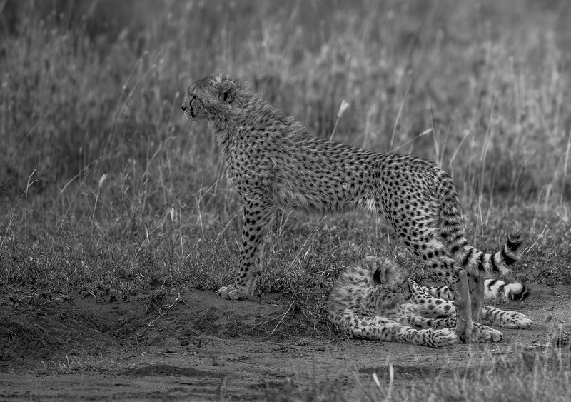 Tanzania_Feb_2018-1173.jpg