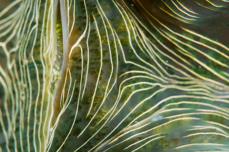 clam-4929.jpg