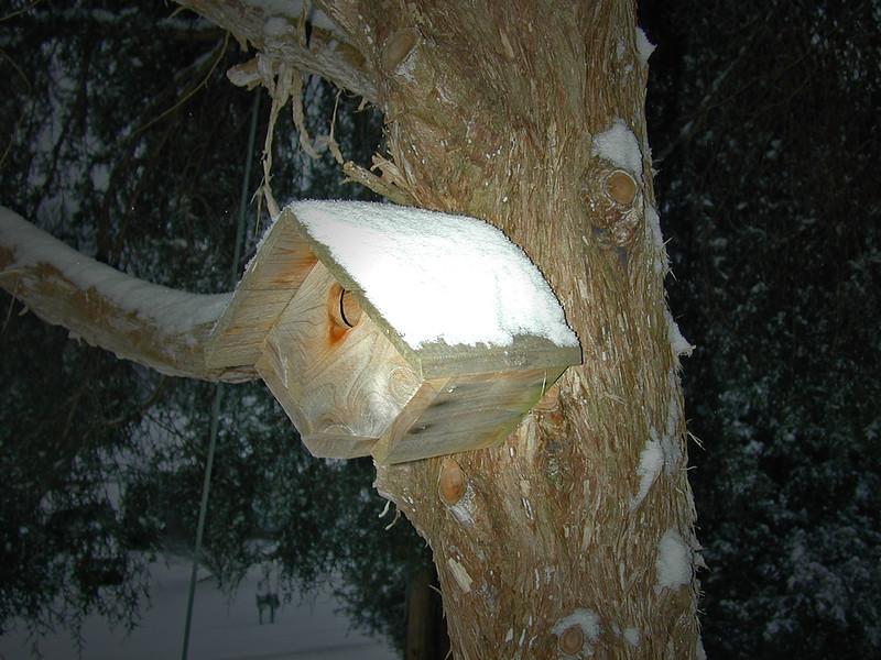 Birdhouse in the Big Cedar