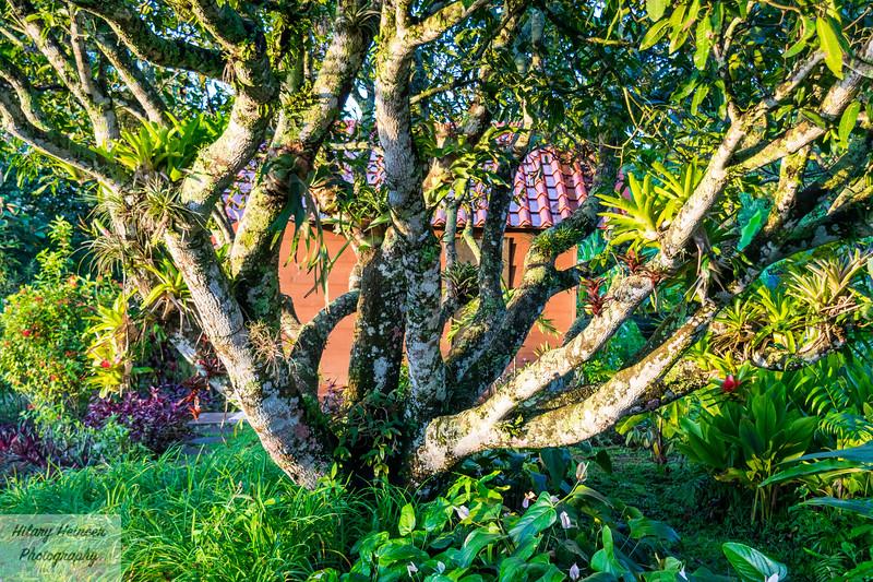 Vibrant Trees in Costa Rica