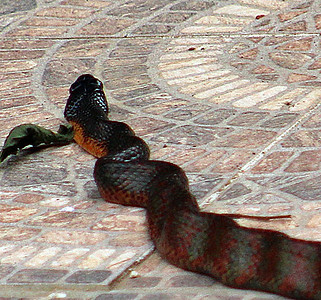 UNKNOWN SNAKES
