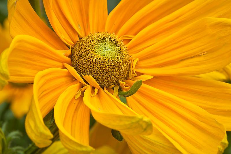 Botanicgarden12-0959.jpg