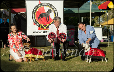 Stafforshire Bull Terrier Club of Qld Specialty Show