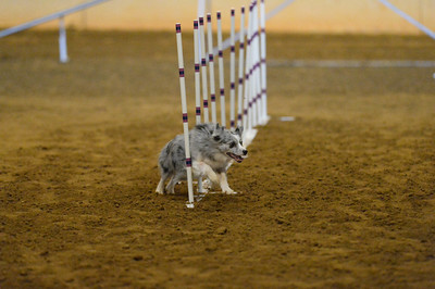 SOJAC AKC Agility Trial February 5-7