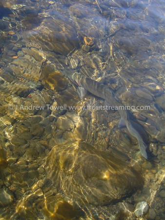 050306 Yakima River Washington