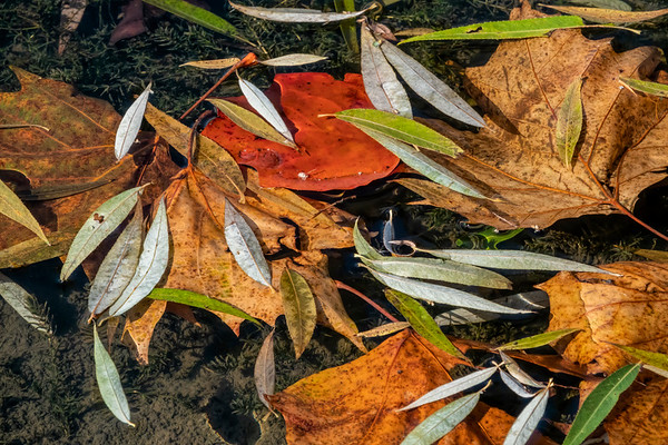 Fall Sights - Ground or Water Level