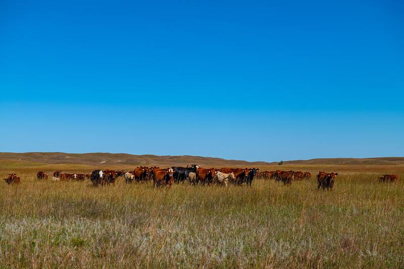 Horn Ranch-1758.jpg