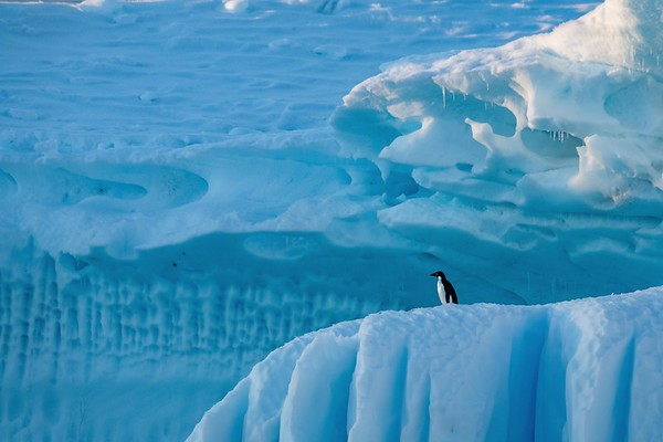 Antarctique et Géorgie du Sud
