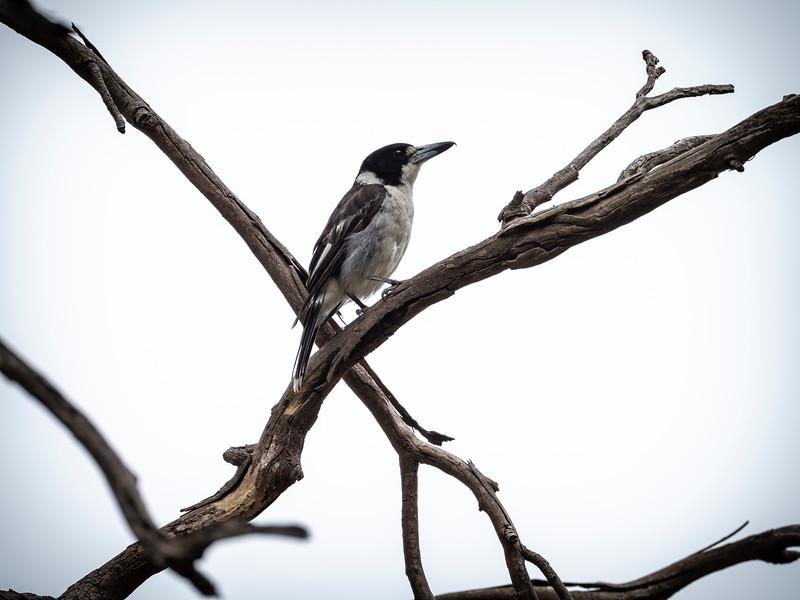 011119 bird  _18.JPG