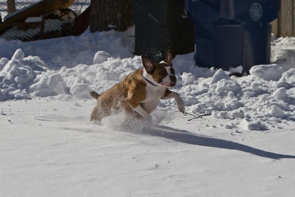 2010 Snow Dogs