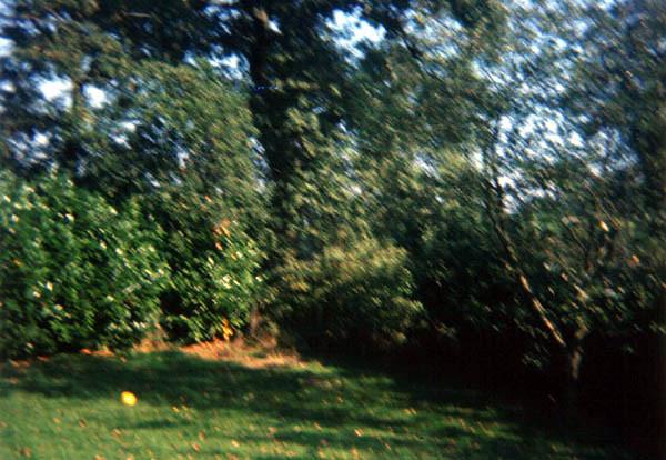 1972-0340.jpg