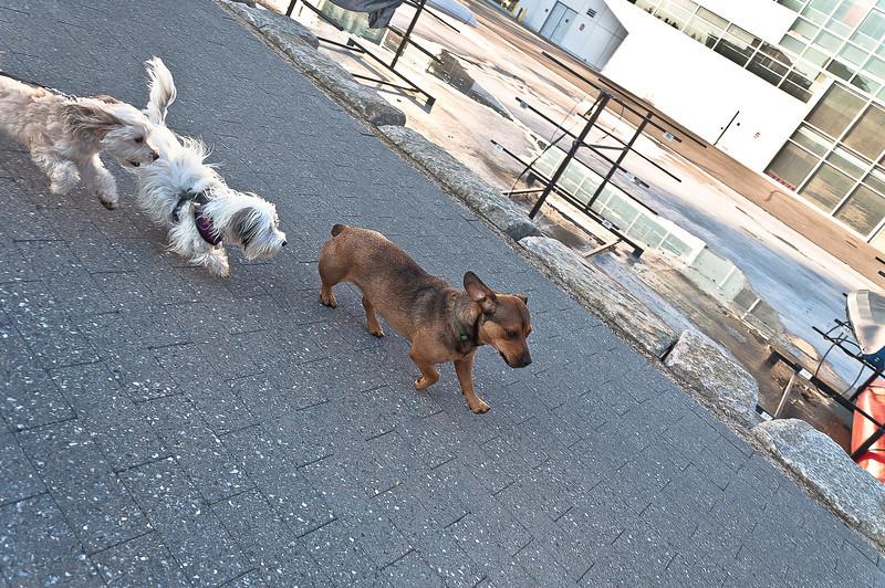 dog run29.jpg