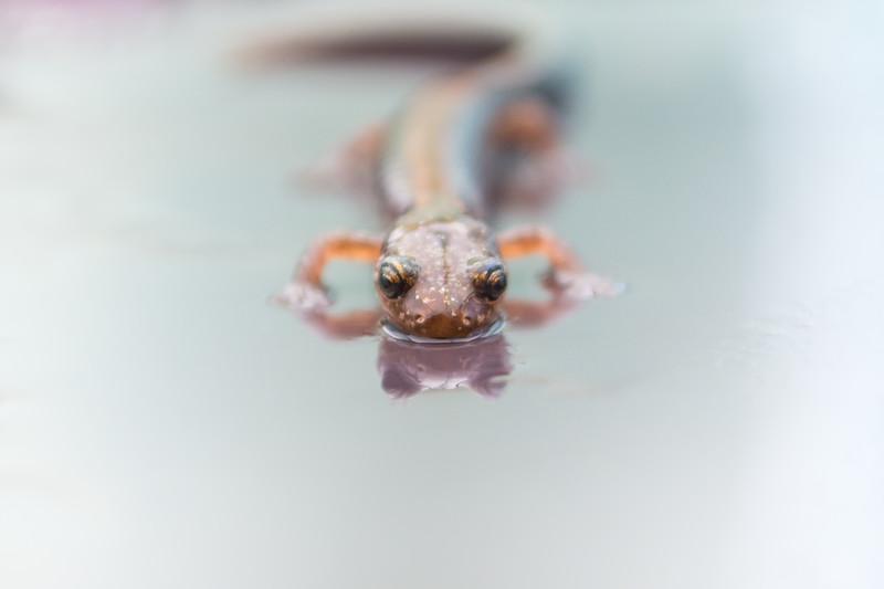salamander sept 2018 (1 of 1)-2.jpg