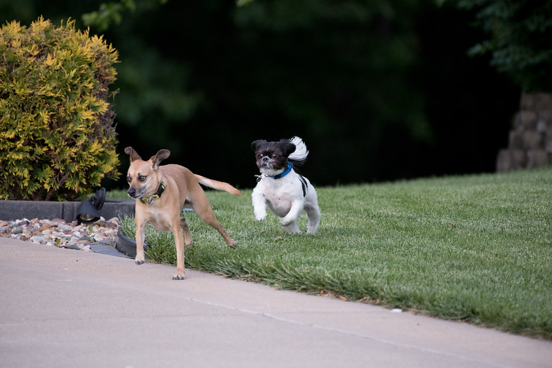 LuLu - Brady - Cooper Play Friends (95 of 109).jpg