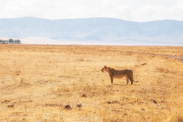 Ngorongoro Crater, Tanzania and Amboseli, Kenya