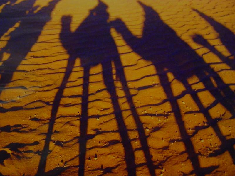 camel shadows - AWSOME!.jpg