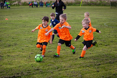 Fearless Goldfish AYSO 2018