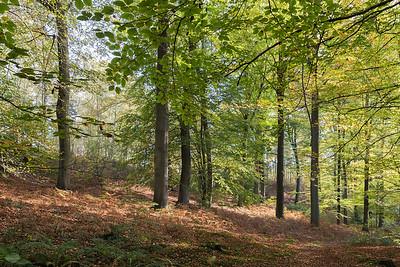 Les bois de Rixensart en automne