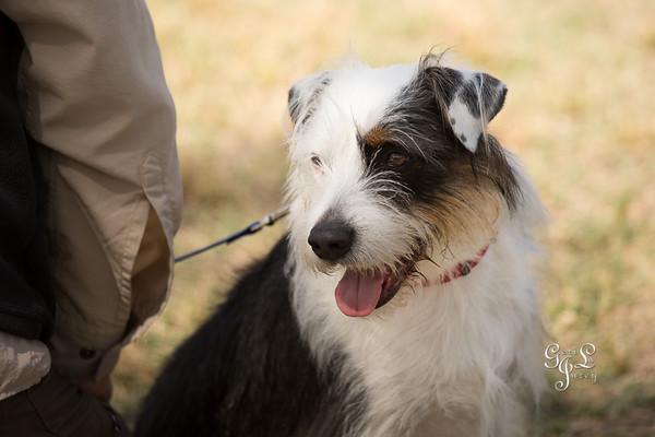 Canine Agility Club AKC Agility Trial 2015